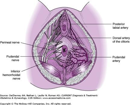 g-spot nerves