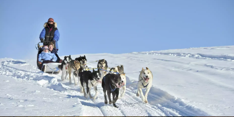 Alaska SLED DOG KENNEL TOUR, alaskan splendor cruise, adults only cruise, clothing optional cruise
